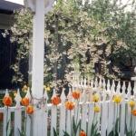 gardenartdecorativefencing16-jpg
