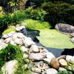 pond3-jpg
